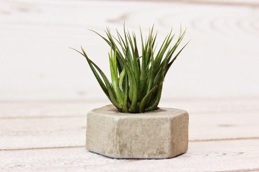 DIY Blumentopf aus Beton