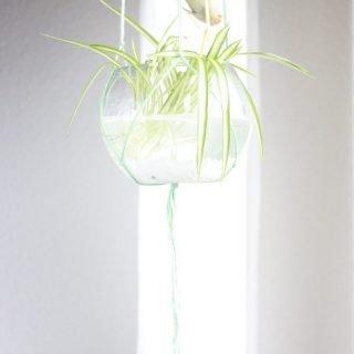 Hängepflanzen selber machen