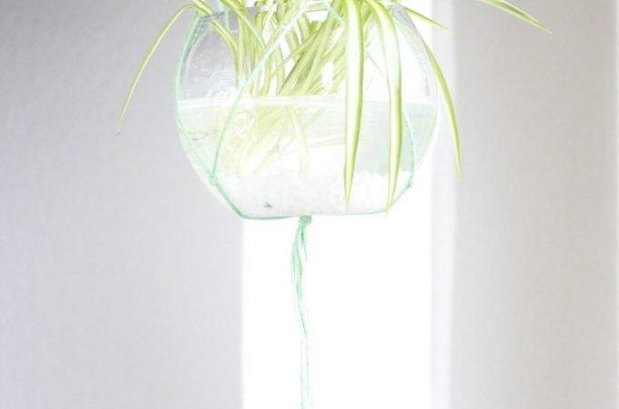 DIY Hängepflanzen