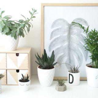 Pflanzen Deko - Urban Jungle Bloggers