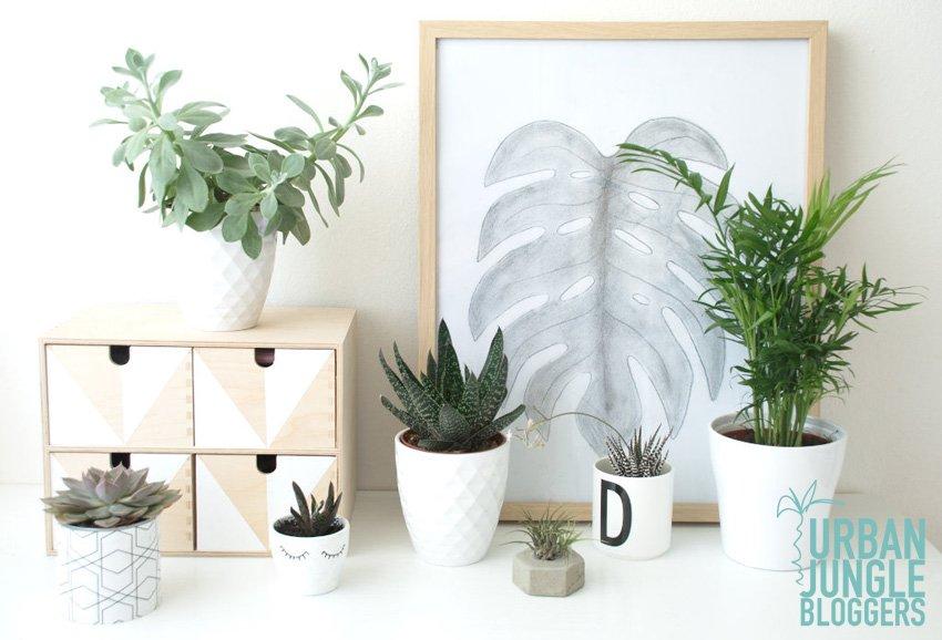 Plant Gang Urban Jungle Bloggers