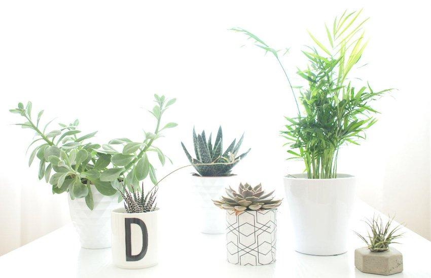 Sukkulenten und Palmen