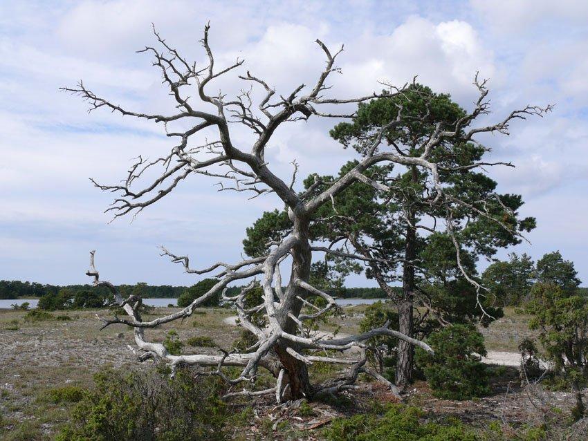 Karge Landschaft auf Gotland