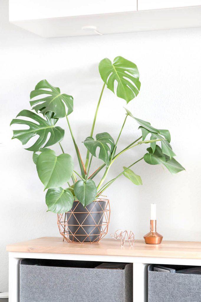 Mostera Pflanze auf meinem gepumpten Besta. Pflanzen verleihen einem Raum doch direkt mehr Wohnlichkeit