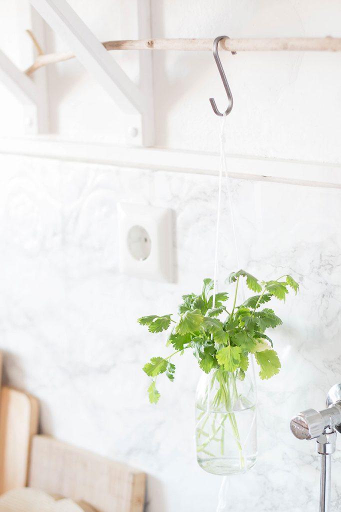 Kräuter an Treibholz Ast in der Küche aufhängen