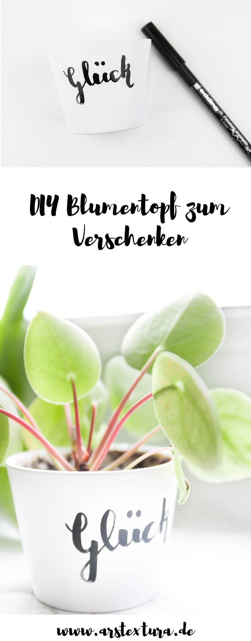 DIY Blumentopf zu verschenken mit Pillen Ableger