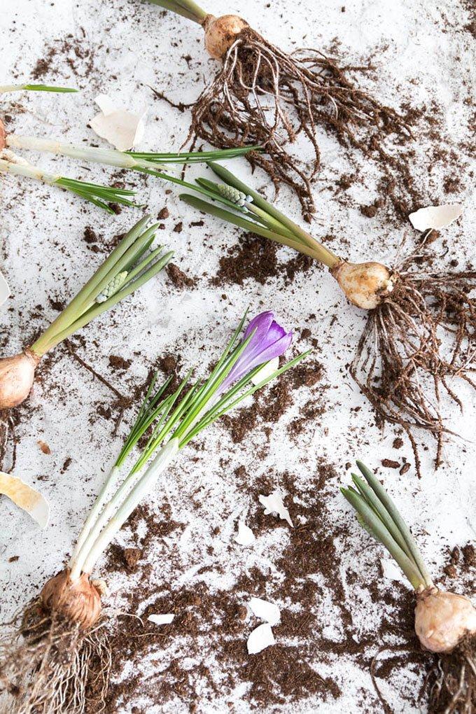 Osterdekoration mit Frühlingsblumen basteln - Krokusse einpflanzen | DIY mit Blumen | Ostern basteln